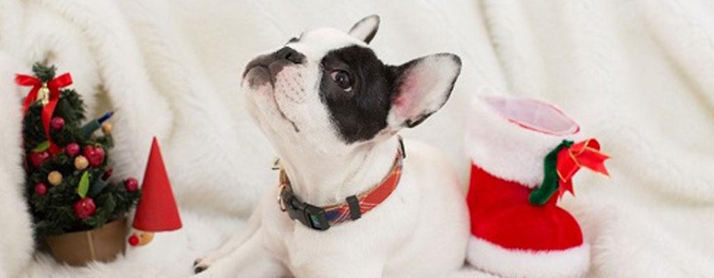 格安スマホで愛犬撮り比べ!スマホカメラ比較と撮り方