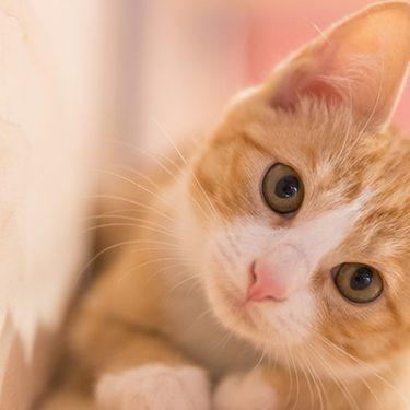 迷子になった愛犬や愛猫も探せるアプリ「ドコノコ」って?