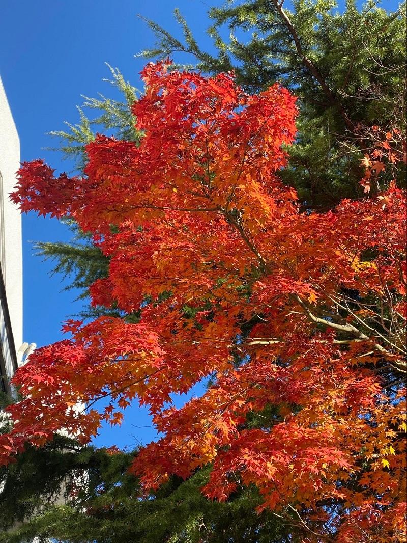 紅葉と一緒に空も撮影してみる