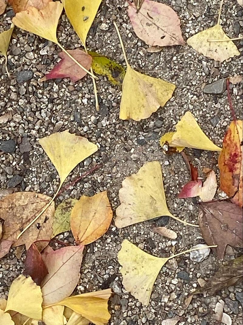 落ち葉を撮影してみる