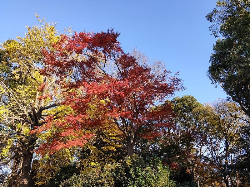 天気の良い日に紅葉を撮影